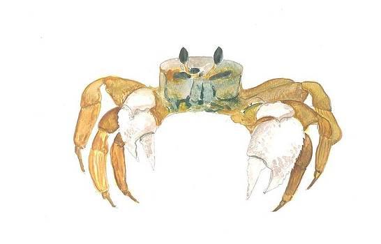 Marko Jezernik - Ghost Crab