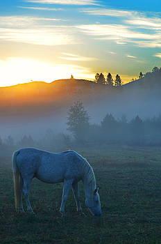 Ghost Horse by Annie Pflueger