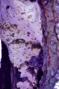 Ghost in the Tree by Laureen Murtha Menzl