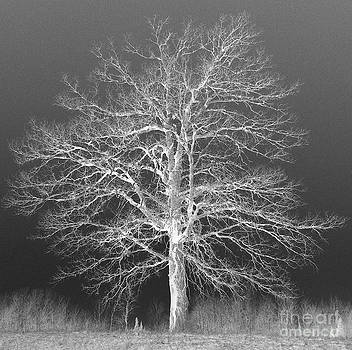 Ghost Oak  by Mike Cartwright