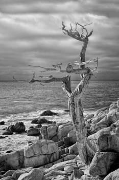 Ghost Tree 17 Mile Drive by Eric  Bjerke Sr