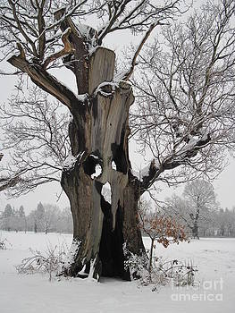 Ghost Tree by Heather Gordon