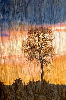 Randall Branham - Giant Cherry Tree bark background texture