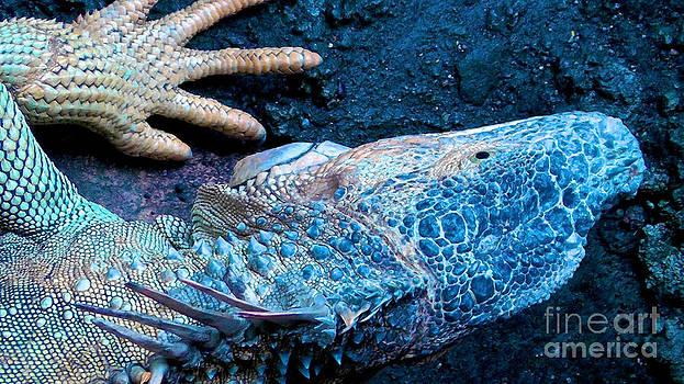 Giant Iguana by Don Kenworthy