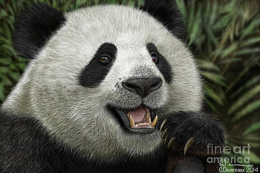 Giant Panda by Chuck Devereaux Art