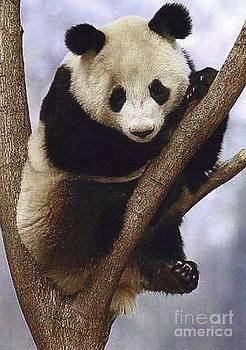 Diane Kurtz - Giant Panda