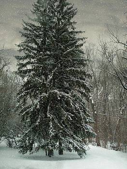 Giant Pine by Sue Midlock
