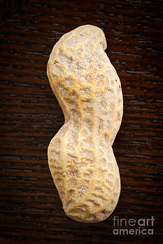 Giant Single Peanut  by Sharon Dominick