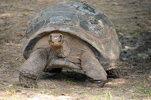 Giant Tortoise Day at the Zoo by Making Memories Photography LLC