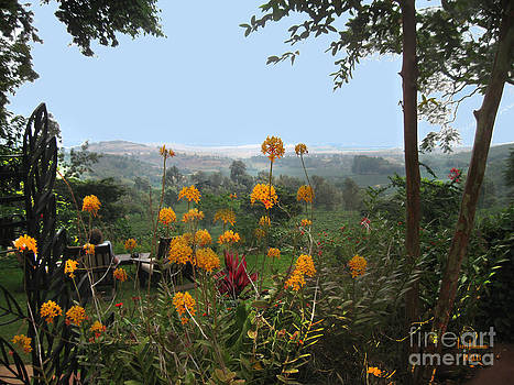 Gibb's Coffee Plantation by Terri Johnson