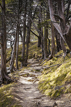Steven Ralser - Gibraltar Rock trail wisconsin