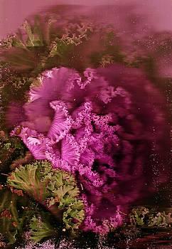 Anne-Elizabeth Whiteway - Gift from the Garden
