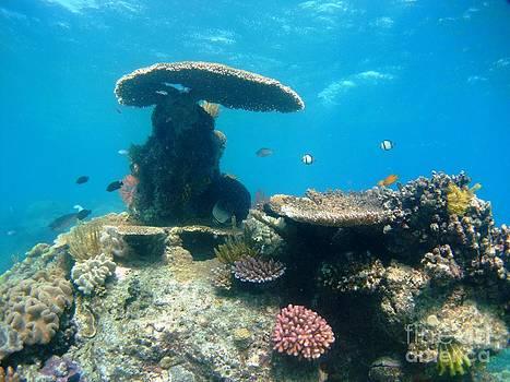 Gilli reef by Crystal Beckmann