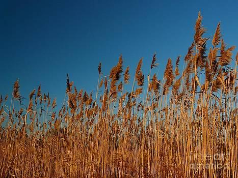 Christine Stack - Gilsland Farm Autumn Reeds