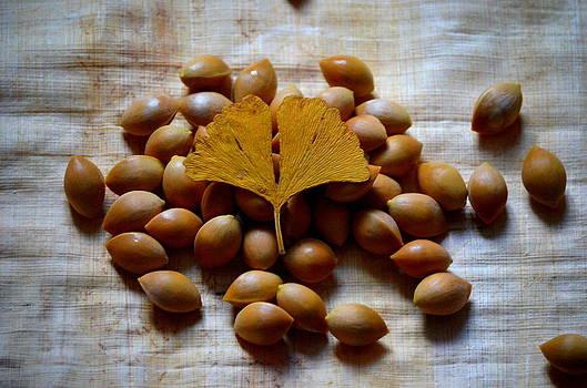 Gingko Seeds by Riad Belhimer