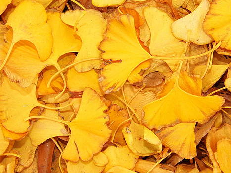 Ginko Leaves by Kay Sparks