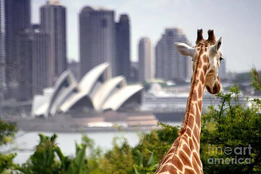 Katka Pruskova - Giraffe and Sydney