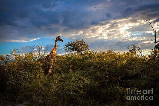 Katka Pruskova - Giraffe at Sunset II