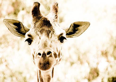 Cindi Castro - Giraffe