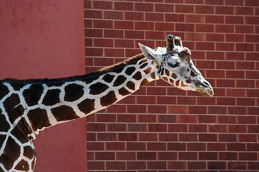 Julie Magers Soulen - Giraffe Crisscross