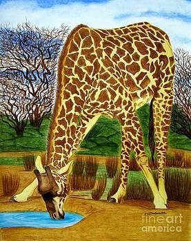 Giraffe Drinking by Barbara Pelizzoli