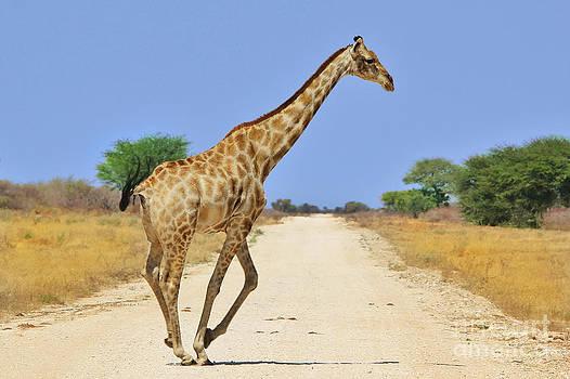 Hermanus A Alberts - Giraffe Gallop of Gold