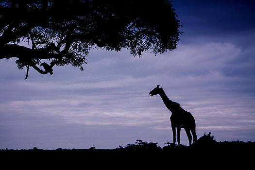 Mauverneen Blevins - Giraffe in Silhouette