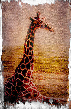 Giraffe by Tom Pickering of Photopicks Photography and Art