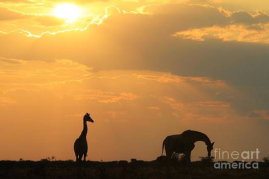 Hermanus A Alberts - Giraffe Sunset - Iconic Symbol of Freedom