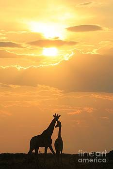 Hermanus A Alberts - Giraffe Sunset - Love of Freedom