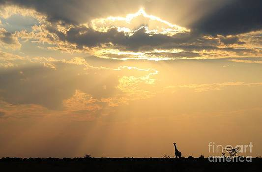 Hermanus A Alberts - Giraffe Sunset - Magnificent Nature