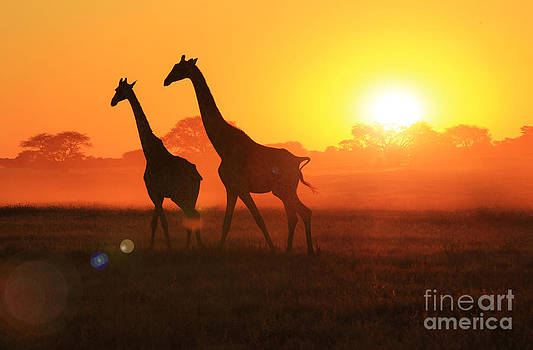 Hermanus A Alberts - Giraffe Sunset Wonder