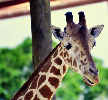 Giraffe Vogue...Strike a Pose by Kelly D Photography