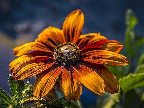 Give Me Sunshine by Gerald Murray Photography