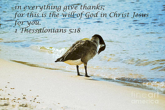Giving Thanks by Reflections by Brynne Photography