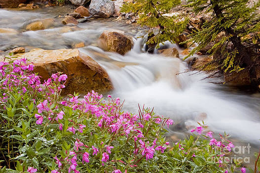 Oscar Gutierrez - Glacial stream with wild flowers
