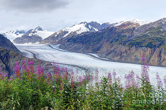 Glacier With Fireweeds by Stanza Widen