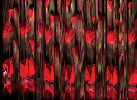Susan Leake - Gladioli gladiolus