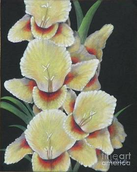 Gladiolus by Ace Robst Jr