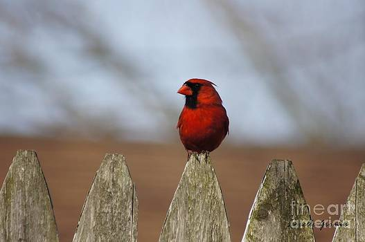 Glamorous Red by Lorelle Gromus