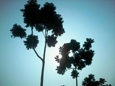 Glary Trees by Anshuman Banerjee