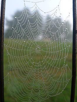 Richard Reeve - Glassy Dew Drops