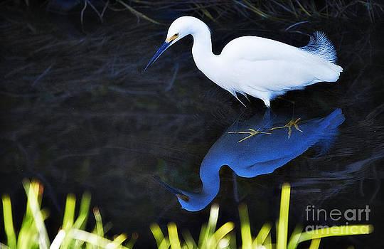 Glassy Egret by Van Schipper