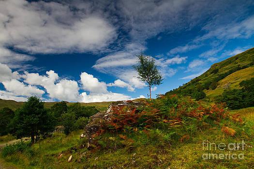 Glen Finglas autumn Scotland by Gabor Pozsgai