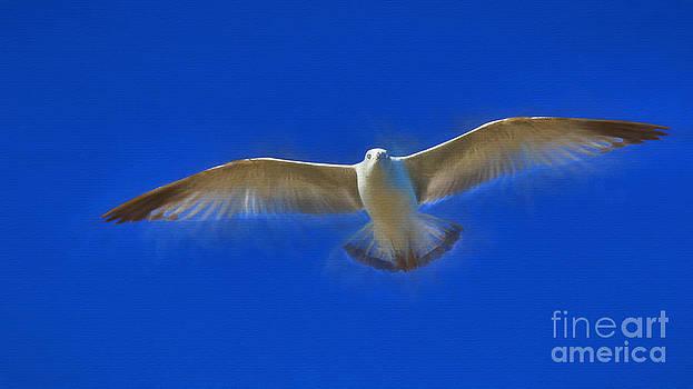 Dave Bosse - Gliding