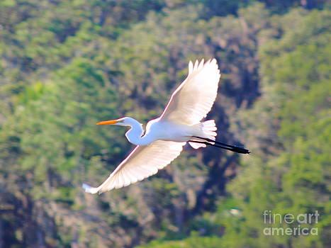 Gliding Egret by Andre Turner