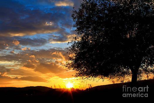 Glimmer of Hope by Everett Houser