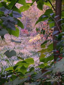 Scott B Bennett - Glimps through the trees