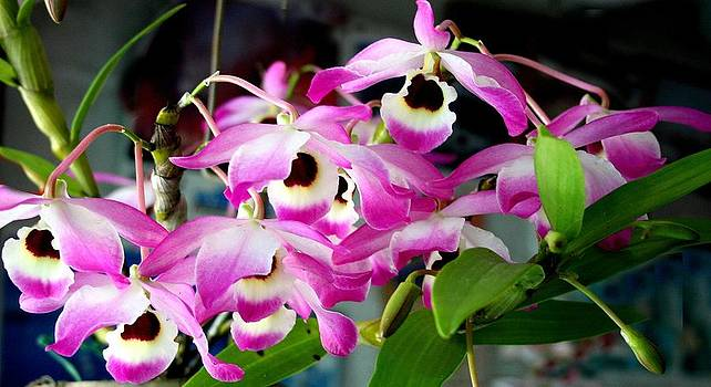 Glorious Orchids by Kevin Perandis