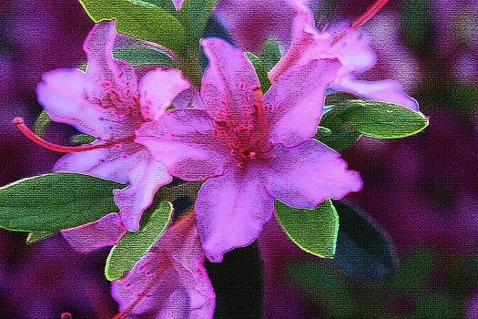 Glorious Pink Azaleas by Barbara Dean
